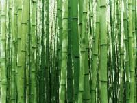 vista-bambus